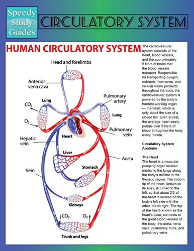 9781633839007: Circulatory System (Speedy Study Guide)