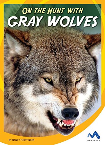 9781634074506: On the Hunt With Gray Wolves (On the Hunt With Animal Predators)
