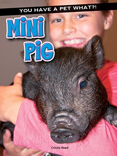 Mini Pig: Reed, Cristie
