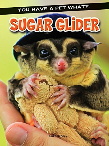 9781634305365: Sugar Glider (You Have a Pet What?!)