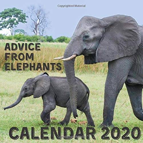 9781671546653: Advice From Elephants Calendar 2020: December 2019 - December 2020 With Elephant Inspirational Quotes