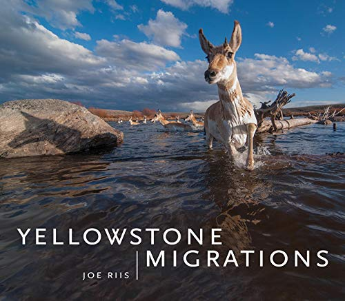 9781680510898: Yellowstone Migrations: Preserving Freedom to Roam