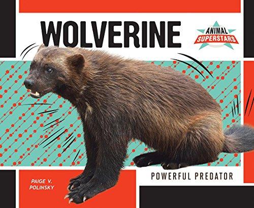 Wolverine: Powerful Predator (Library Binding): Paige V. Polinsky