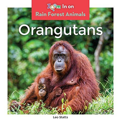 Orangutans (Zoom in on Rain Forest Animals): Leo Statts