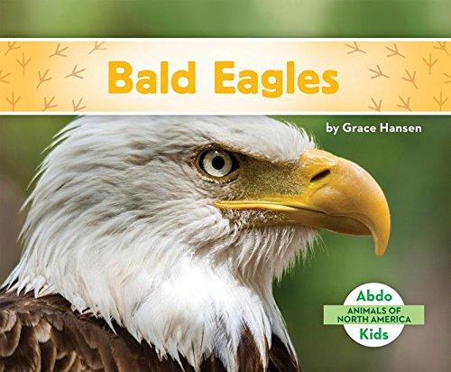 9781680801088: Bald Eagles (Animals of North America)