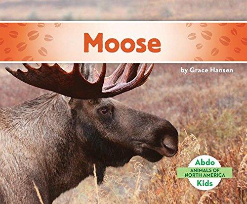 9781680801125: Moose (Animals of North America)