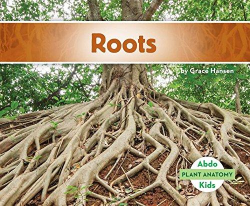 9781680801385: Roots (Plant Anatomy)