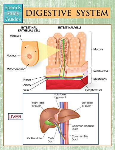 9781681456591: Digestive System (Speedy Study Guides)