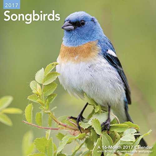 9781682094068: Songbirds Wall Calendar (2017)