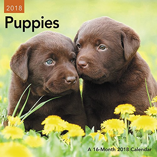 Puppies 2018 Calendar: Not Available