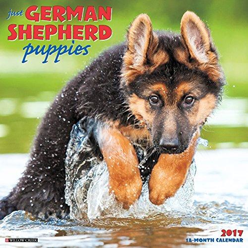 Just German Shepherd Puppies 2017 Wall Calendar (Dog Breed Calendars): Willow Creek Press