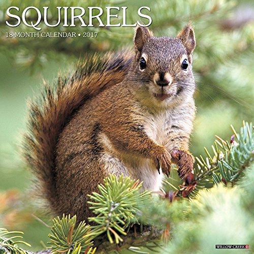Squirrels 2017 Wall Calendar