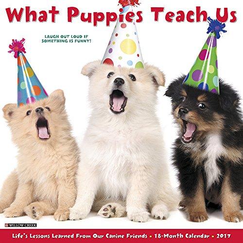 9781682342282: What Puppies Teach Us 2017 Calendar