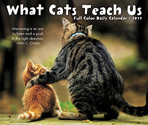 9781682342718: What Cats Teach Us 2017 Calendar