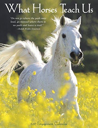 What Horses Teach Us 2017 Engagement Calendar: Willow Creek Press