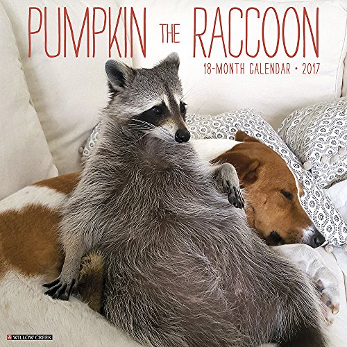9781682343388: Pumpkin the Raccoon 2017 Wall Calendar