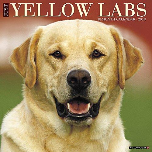 Calendar Labs : Just yellow labs wall calendar dog breed