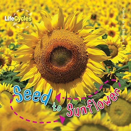 Seed to Sunflower: De La Bedoyere, Camilla
