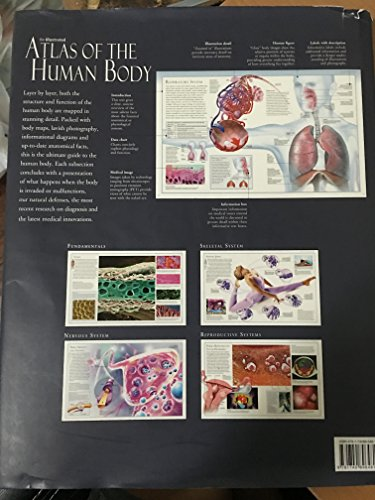 The Illustrated Atlas of the Human Body: McMillan, Beverly