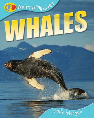 9781741262483: Whales (QED Animal Lives)