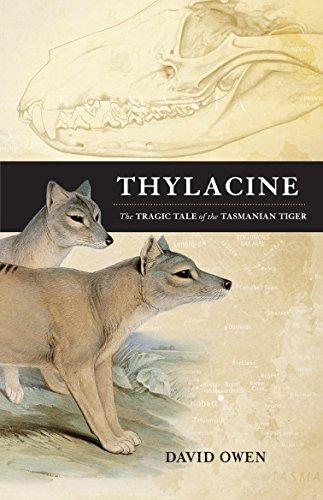 9781742376318: Thylacine: The Tragic Tale of the Tasmanian Tiger