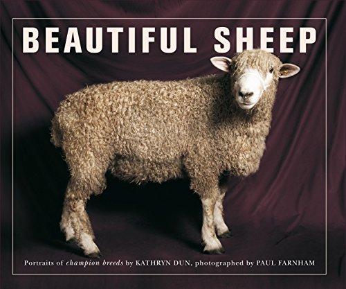 Beautiful Sheep (Paperback): Kathryn Dun
