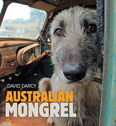 Australian Mongrel: Darcy, Dave