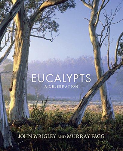 Eucalypts (Paperback): Murray Fagg