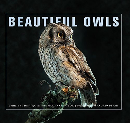 9781743369913: Beautiful Owls