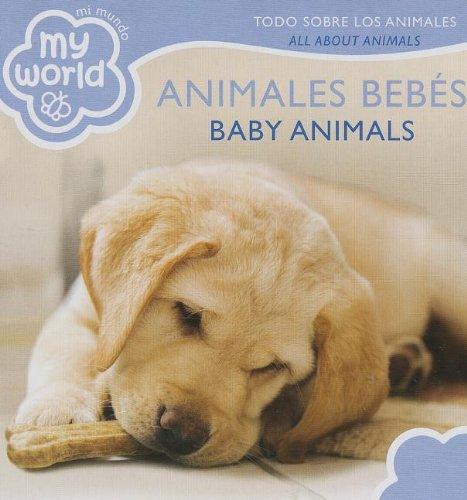 Animales Bebes / Baby Animals: Todo Sobre: Brimax Publishing