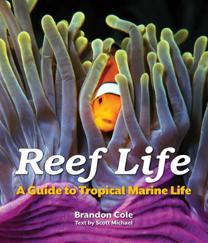 Reef Life: A Guide to Tropical Marine Life (Paperback): Brandon Cole