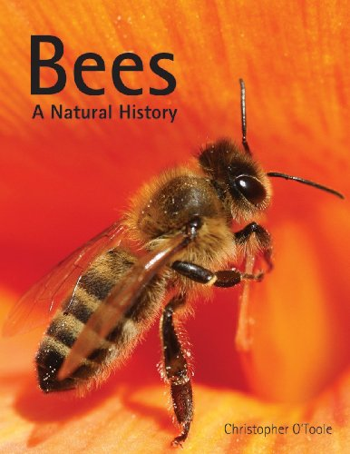 Bees: A Natural History: O'Toole, Christopher