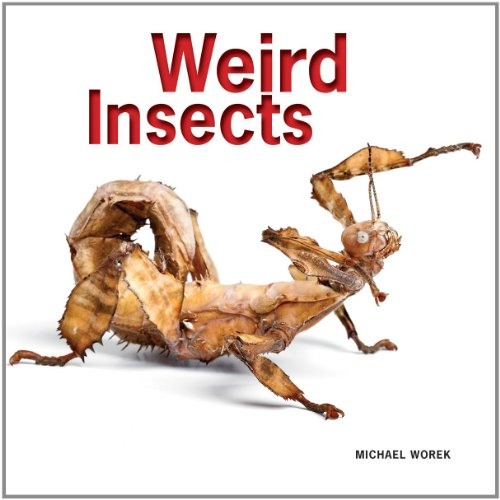 9781770852341: Weird Insects