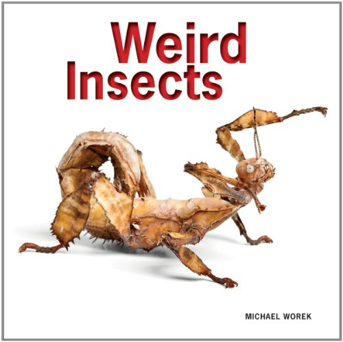9781770852358: Weird Insects