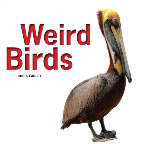 9781770852969: Weird Birds