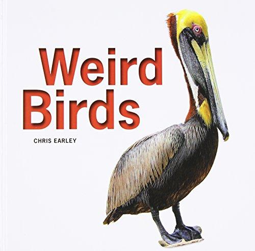 9781770854413: Weird Birds