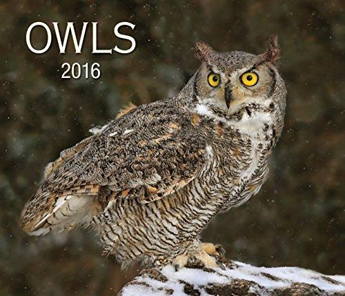 9781770855380: Owls (Calendars 2016)
