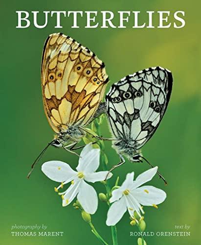 Butterflies (Hardcover): Ron Orenstein