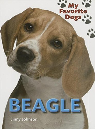 9781770921238: Beagle (My Favorite Dogs)