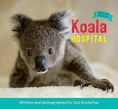Koala Hospital (Wildlife Rescue): Suzi Eszterhas