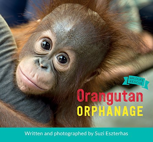 Orangutan Orphanage (Wildlife Rescue): Suzi Eszterhas