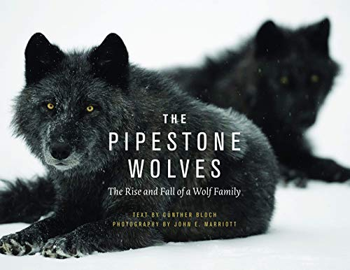9781771601603: The Pipestone Wolves: The Rise and Fall of a Wolf Family