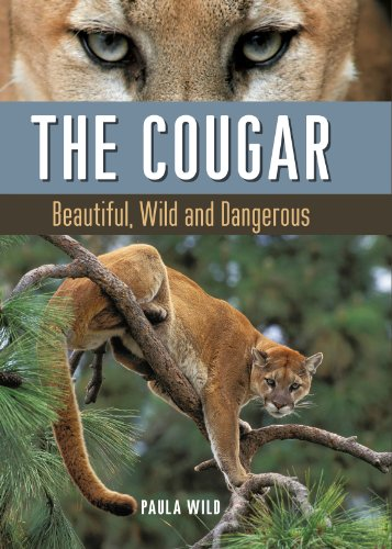 9781771620024: The Cougar: Beautiful, Wild and Dangerous