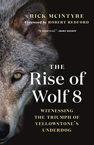 9781771645218: The Rise of Wolf 8: Witnessing the Triumph of Yellowstone's Underdog (The Alpha Wolves of Yellowstone (1))