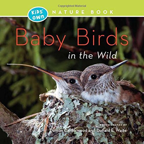 9781772030648: Baby Birds in the Wild