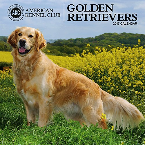 9781772180480: Cal 2017 Golden Retrievers American Kennel Club