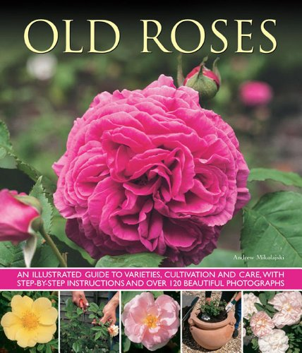 9781780192413: Old Fashioned Roses