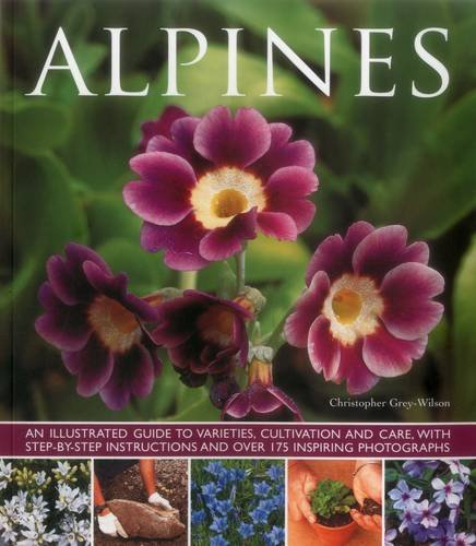 ALPINES: GREY WILSON C.