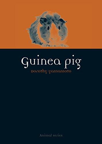9781780234267: Guinea Pig (Animal)