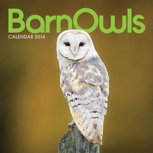 9781781247884: Barn Owls: Mini